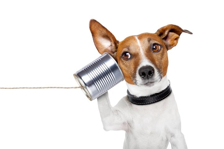 狗狗教不聽?想讓汪星人聽懂你的話?訓犬師說眼神交流是關鍵