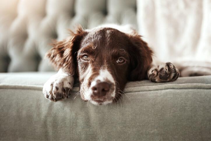 耐心等待是拍好寵物攝影最重要的功課