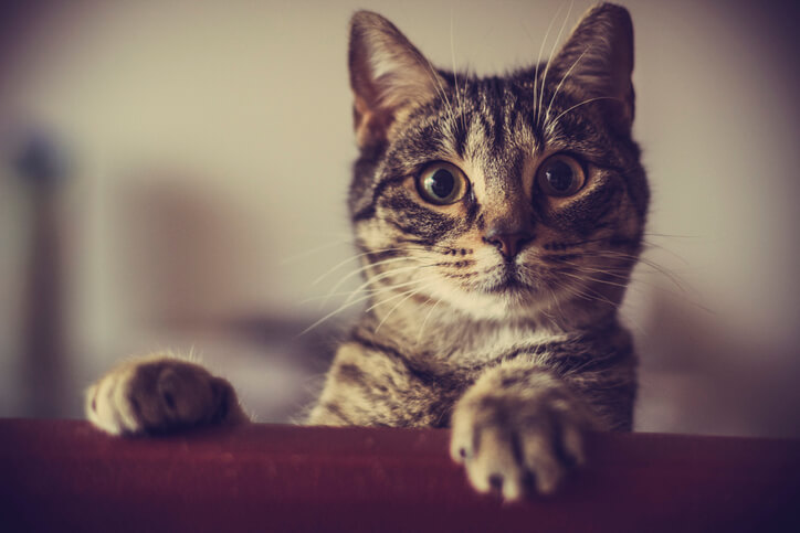 寶貝寵物找飯店?5件貓狗寄養前必須注意的事