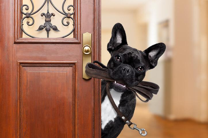 寵物寄養時,若是毛孩有任何需求或特殊事項應事先告知。