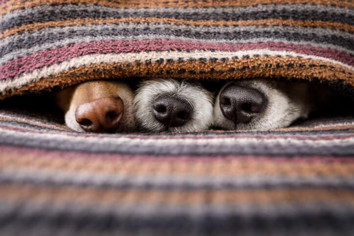 「找人照顧好還是送旅館好?」貓狗寵物寄養2大方式推薦