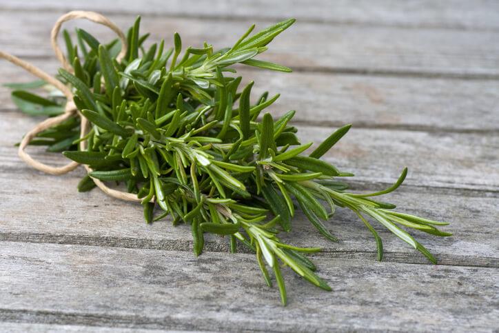 可泡茶也能當作醃製烤雞入味的迷迭香,是陽台常見的香草植物。迷迭香喜歡溫暖氣候,葉片屬於革質,較能耐旱,以富含砂質的土壤栽種有利排水。有人說,心情不好時,到陽台聞聞迷迭香的香氣,總能忘卻煩憂。