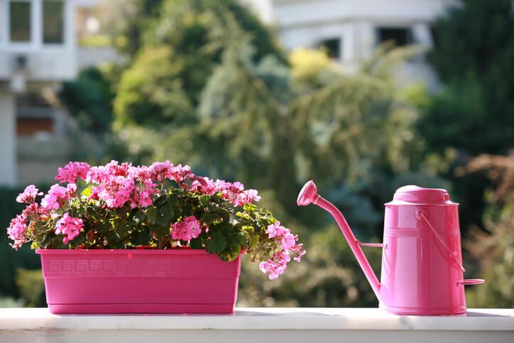在一片翠綠的陽台景觀中,來點亮麗的顏色吧!不妨大膽選用俏麗的桃紅色,讓空間變得更活潑有生氣。