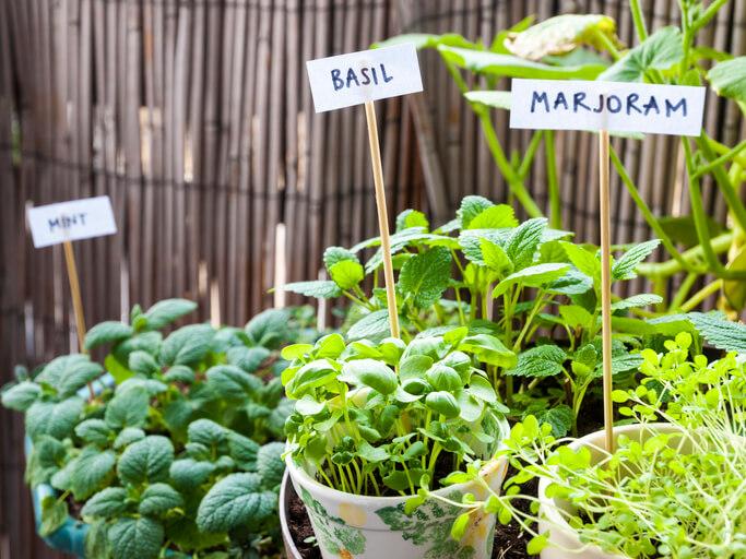 像這樣在盆栽裡插個植物名稱的標籤,一目了然,也多了幾分可愛的感覺,標籤可自行設計,要走簡約文青風還是活潑俏皮風都行。