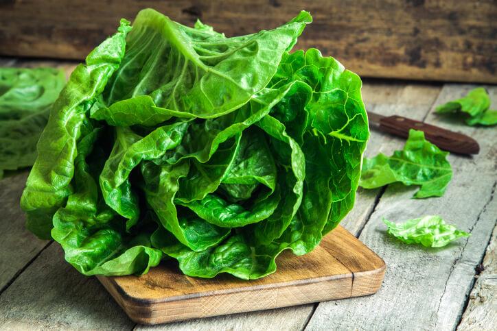 生菜 易種植、不易招蟲害,且病害少,吃了又長,只要種幾棵,天天長不完。