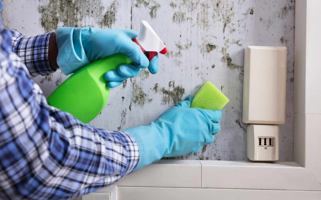 梅雨季潮濕也不怕!拒絕黴菌入侵,居家與衣物包包防霉除霉大作戰